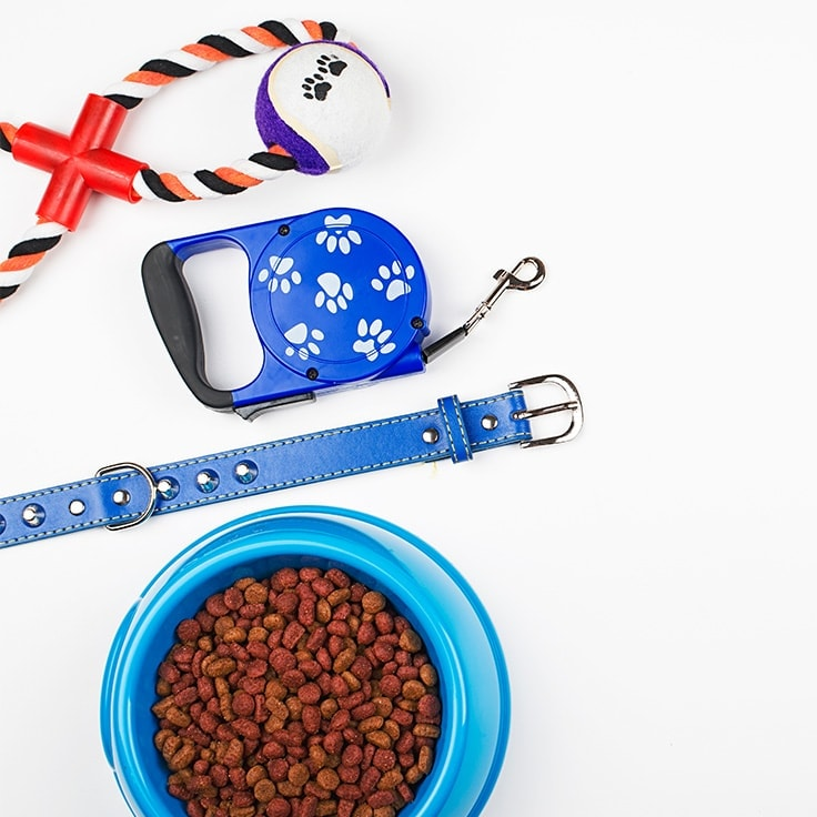 Pet Storage: Your Complete Guide