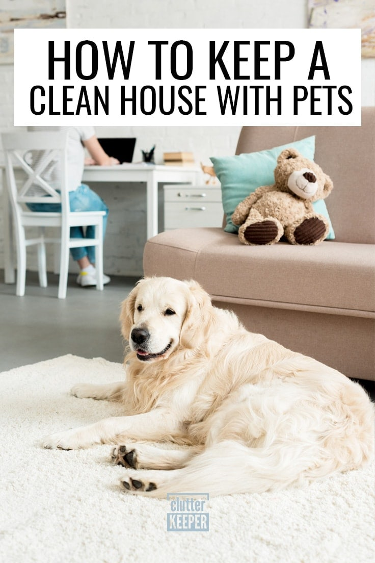 How to Keep a Clean House with Pets